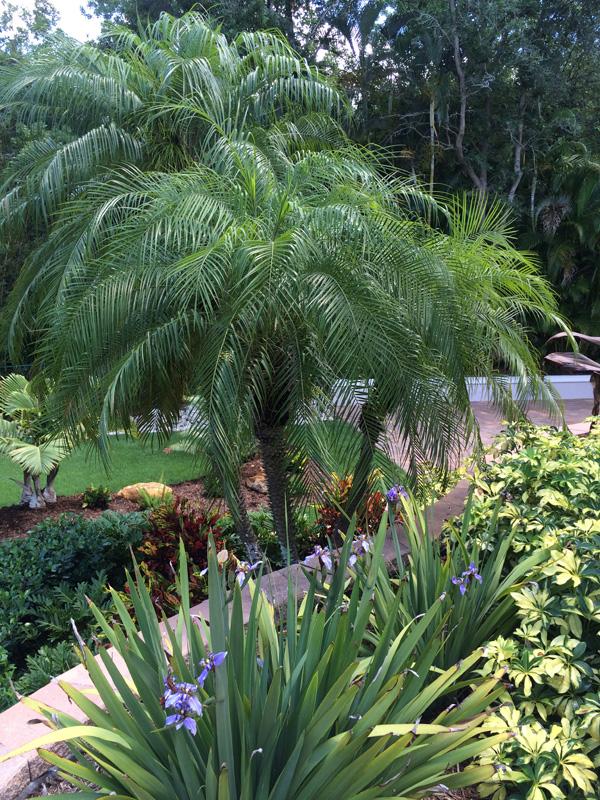 Closeup of Palm Tree